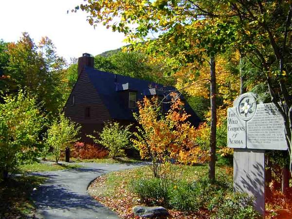 08-08 Acadia in Autumn