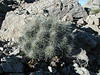 04-17 Branching Out : A documentation of Big Bend's plant life on my wanderings about the park. Some of the names of the cacti have been changed to protect the innocent, and/or may be in error. Let me know.
